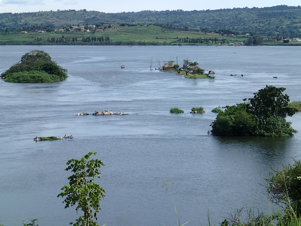 The source of the white nile
