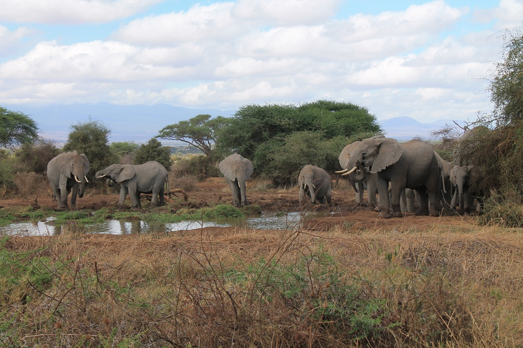 At the lodges waterhole