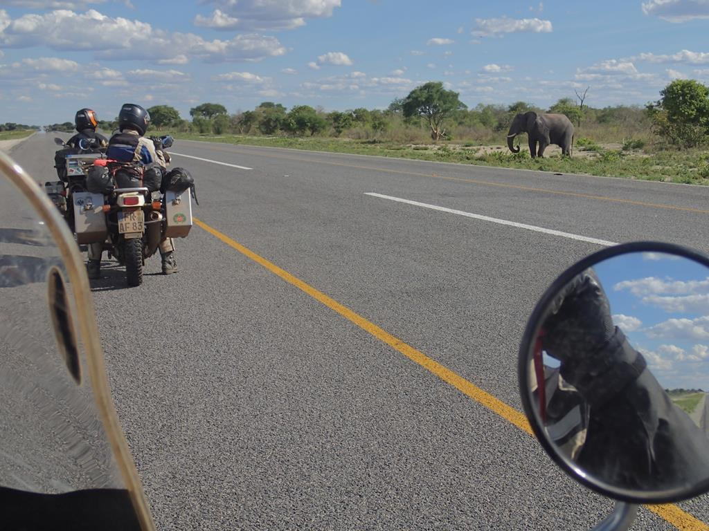 One of the many elephants along the road